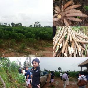 カンボジア農業